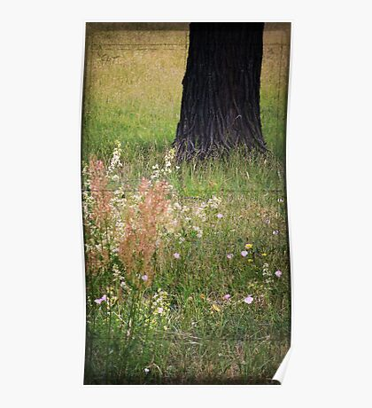 Meadow composition... Poster