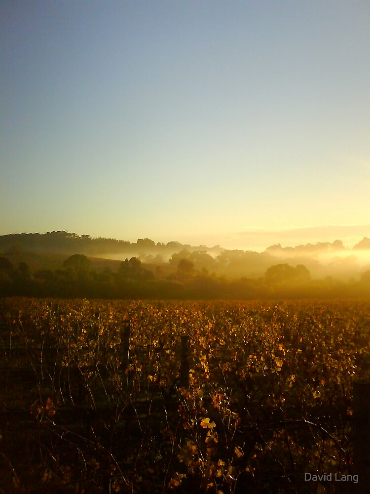 Golden Autumn Vines in the Misty Dawn by David Lang