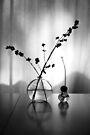 Stillleben mit Avocadosamen von Marianna Tankelevich