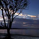 Lone tree at Yamba by myraj