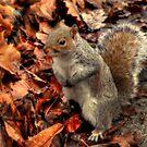 Grey Squirrel  by larry flewers
