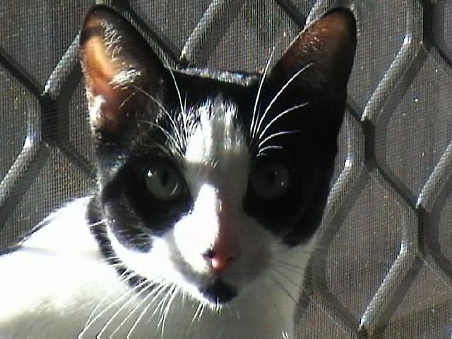 Cat by Ratbag
