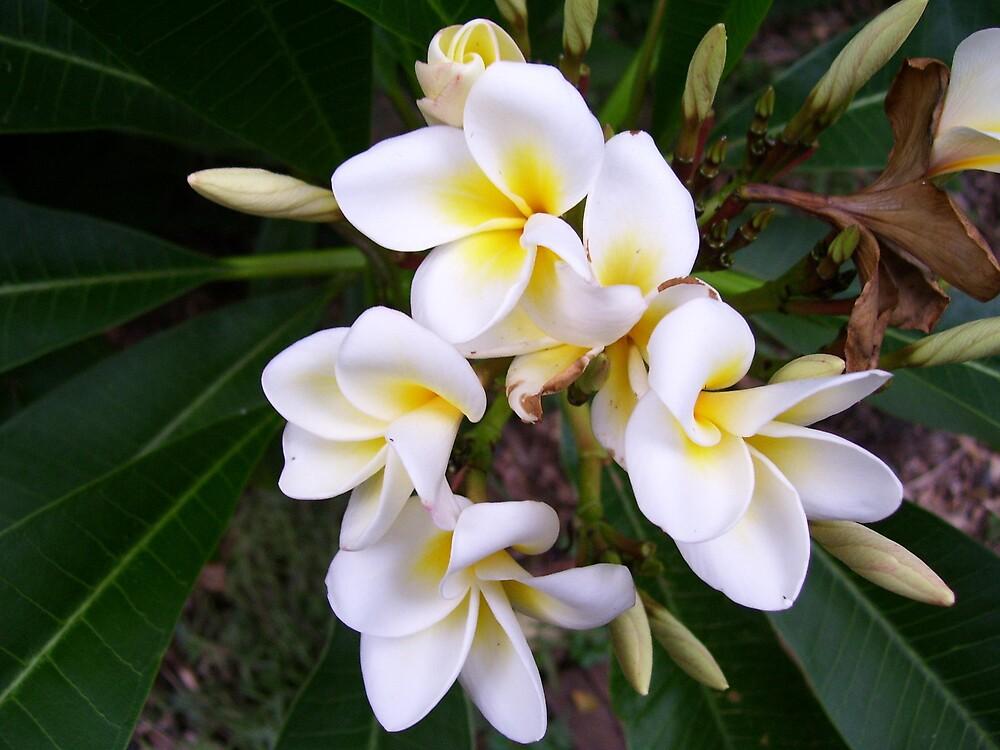 Flower 32 by Ratbag