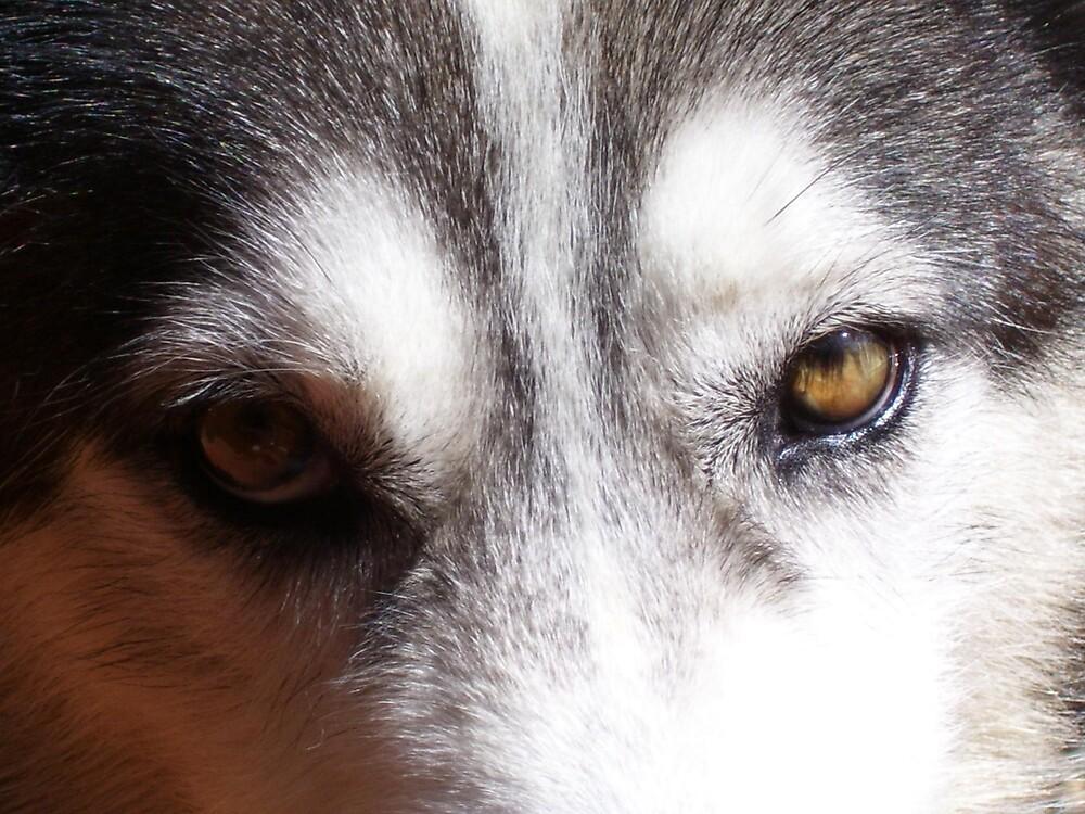 Eyes by Ratbag