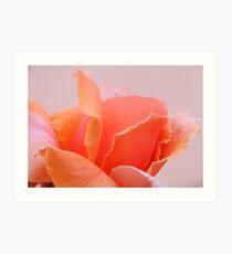 Peach Petals.... Art Print