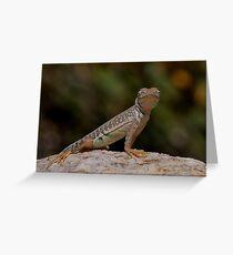 Greater Earless Lizard Greeting Card