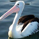 Pelican by Of Land & Ocean - Samantha Goode