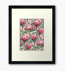 Painted King Proteas on Cream  Framed Print