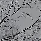 «Impresiones de ramas» de by-jwp