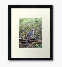 Female Pheasant Woodland Portrait Framed Print
