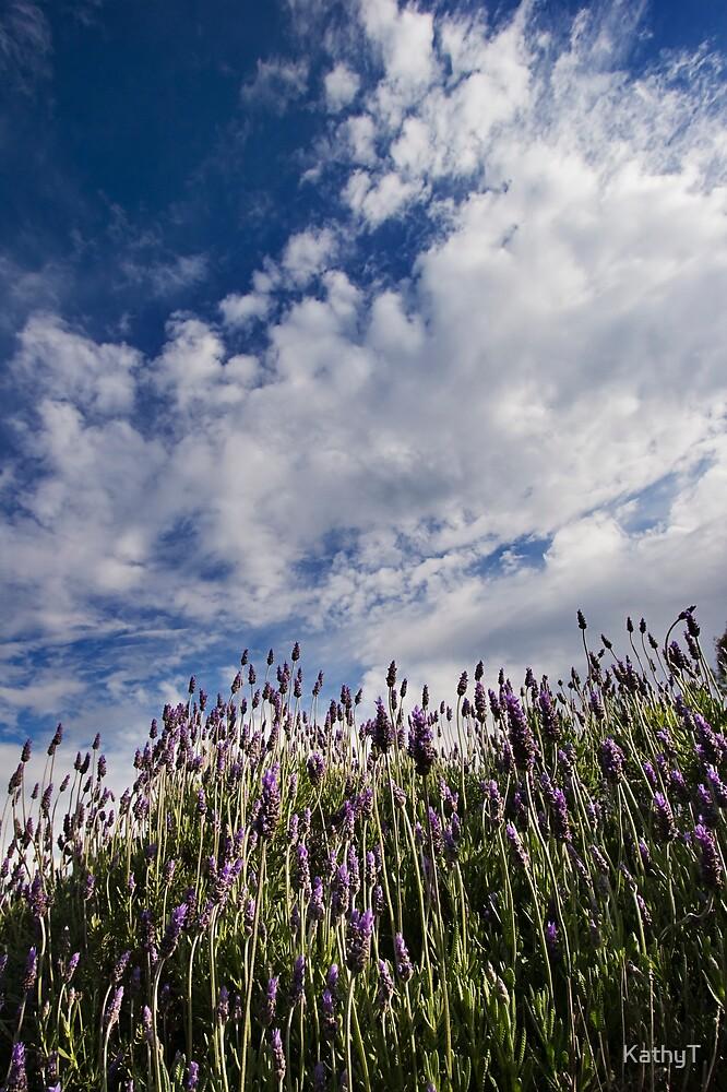 Spring Lavender by KathyT