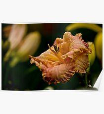 """""""Inherited Wealth"""" Daylily Poster"""