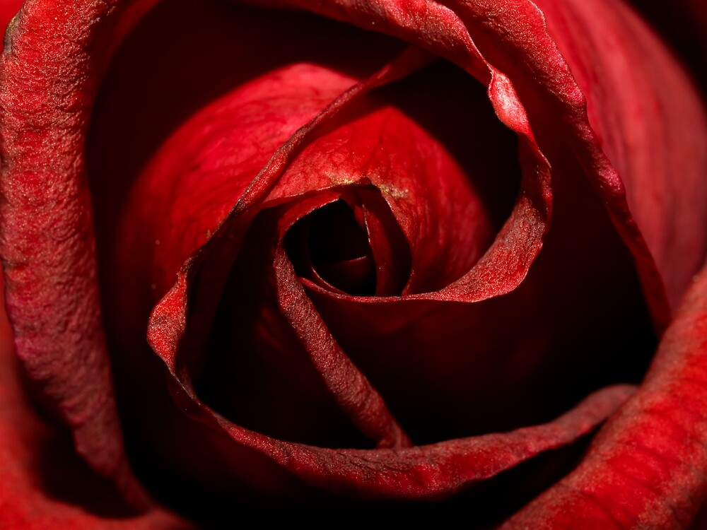 Love Is Red by Jenni77