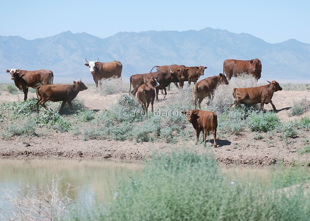 Stay Away From Our Water Hole! by Carol Barona