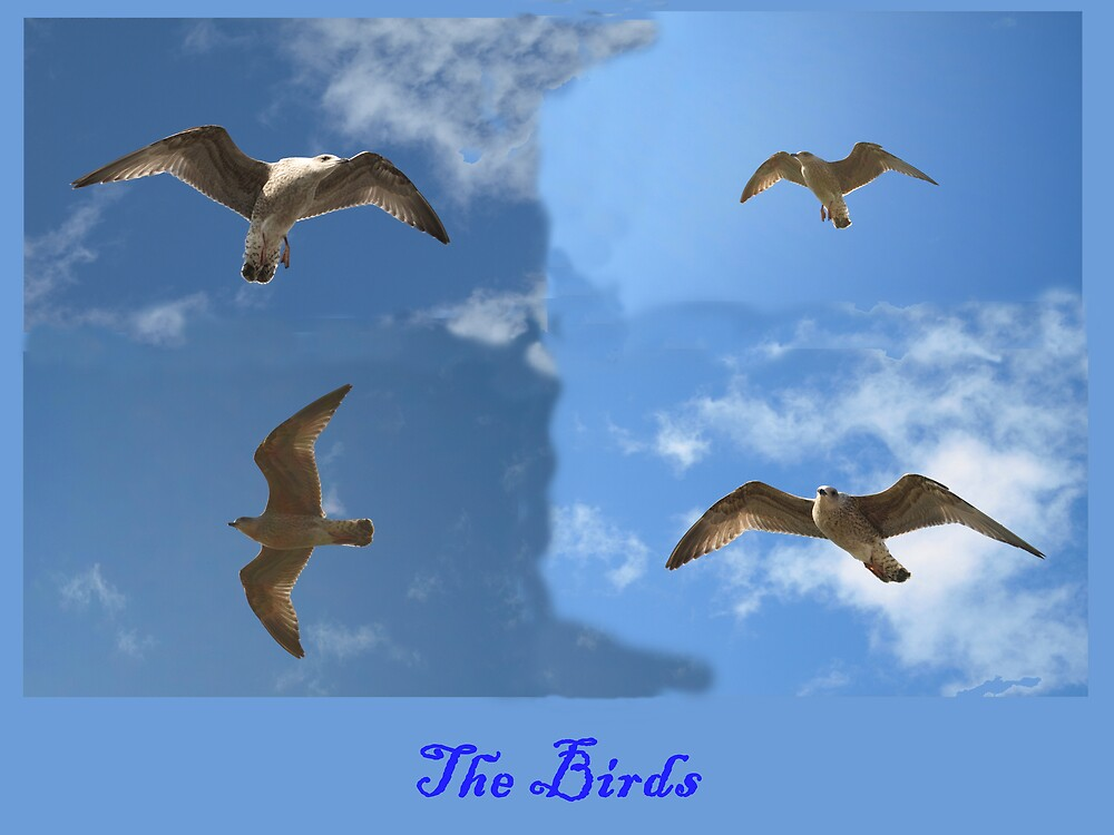 The Birds by Alan Findlater