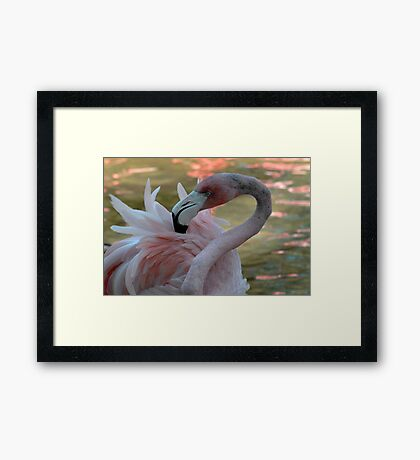 Portrait in Pink Framed Print