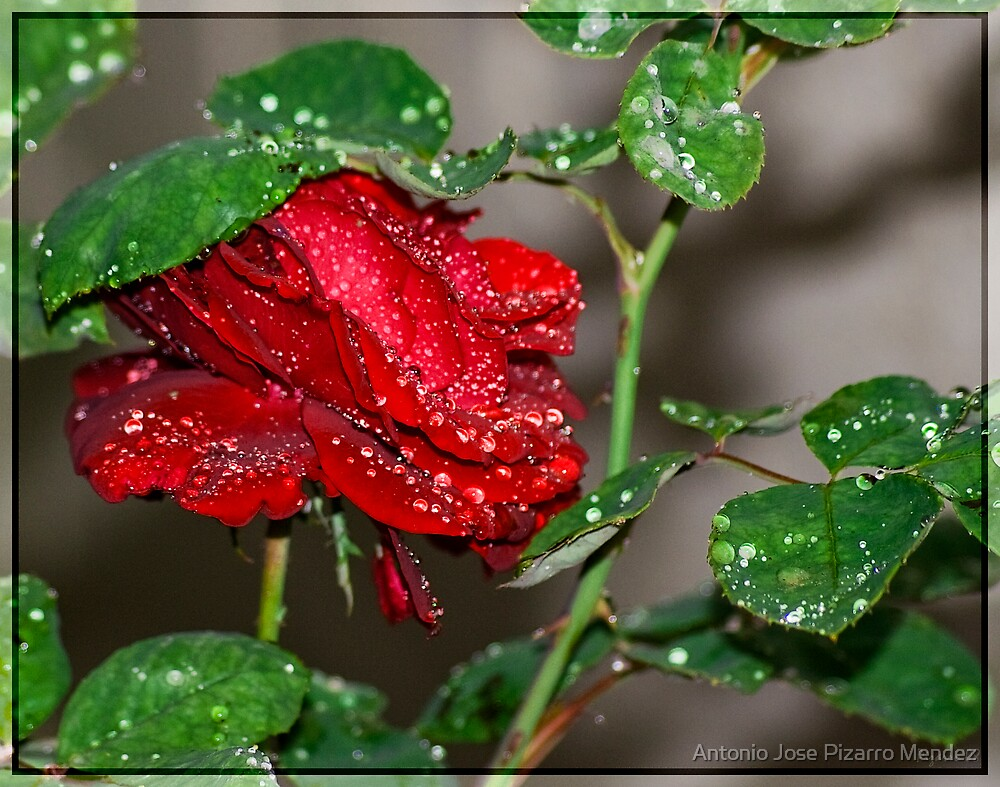 Red, green and water by Antonio Jose Pizarro Mendez