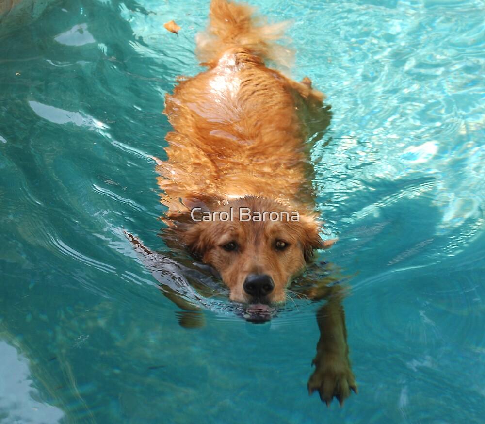 My Golden Otter by Carol Barona
