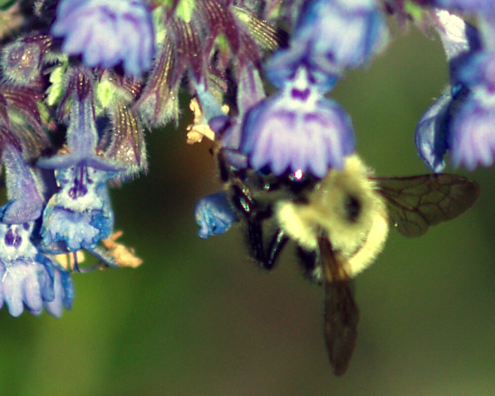 a bee in the catmint by edward gaudette