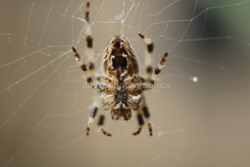 Spider Close Up 1 by davesphotographics