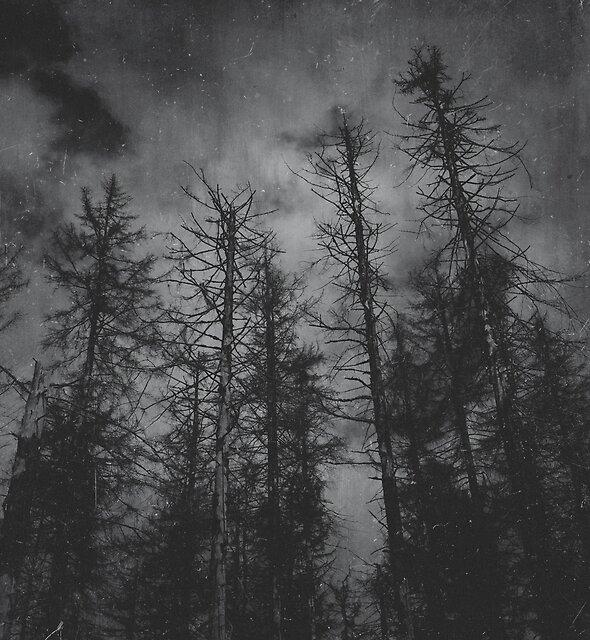 Transmission by Tordis Kayma