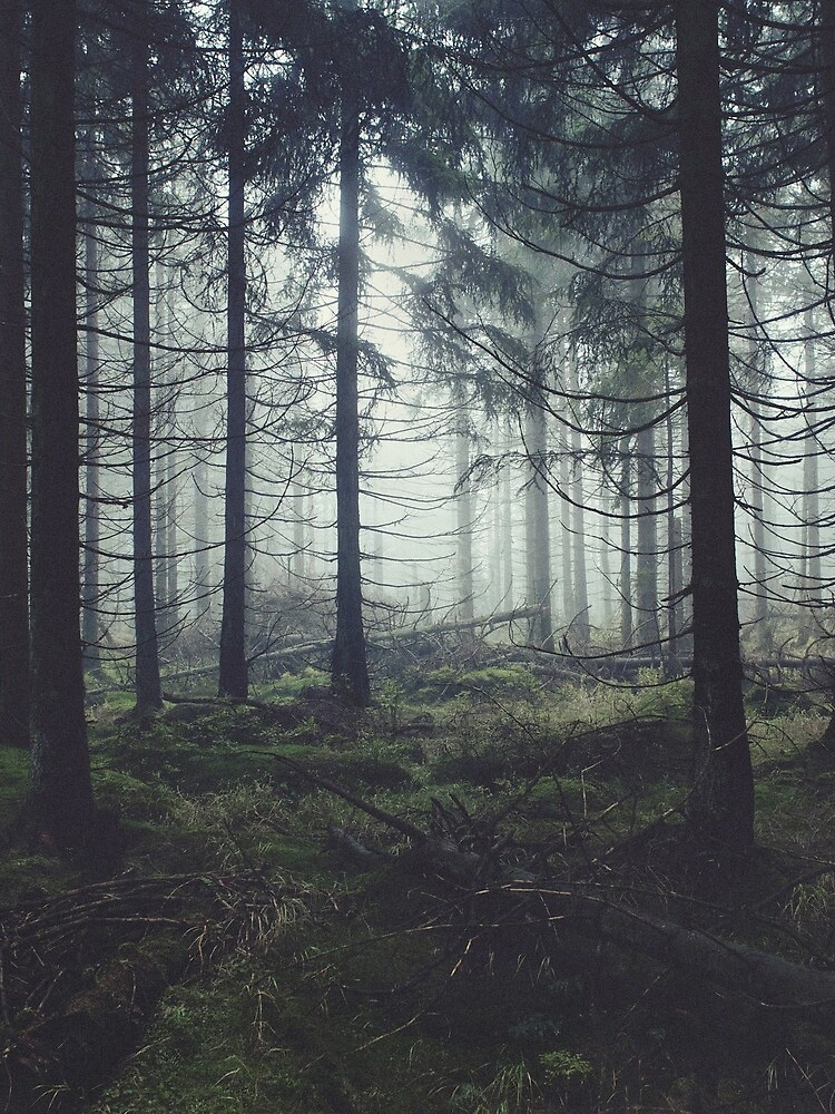 Through The Trees by tekay