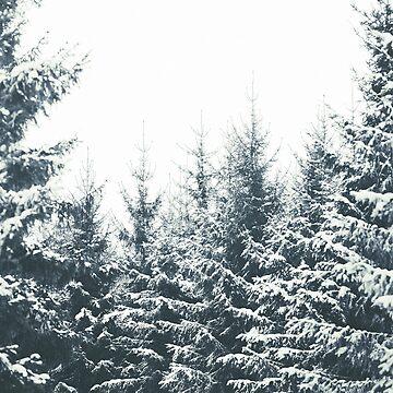 In Winter by tekay