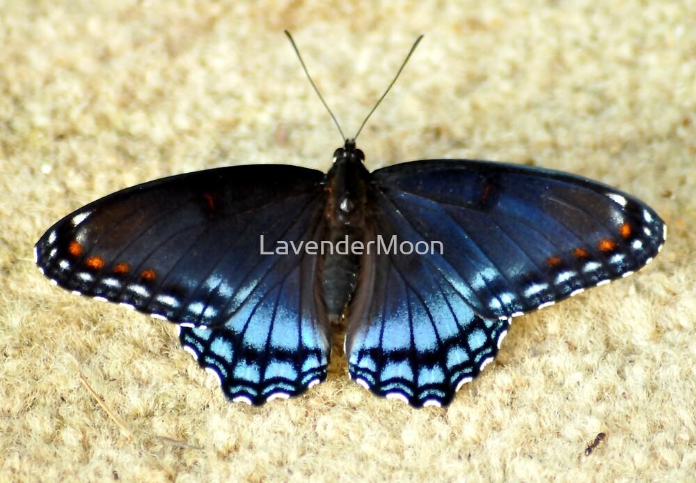 Flat Beautiful by LavenderMoon