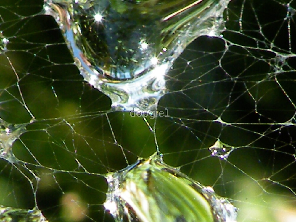 Spiders Wet by dougie1
