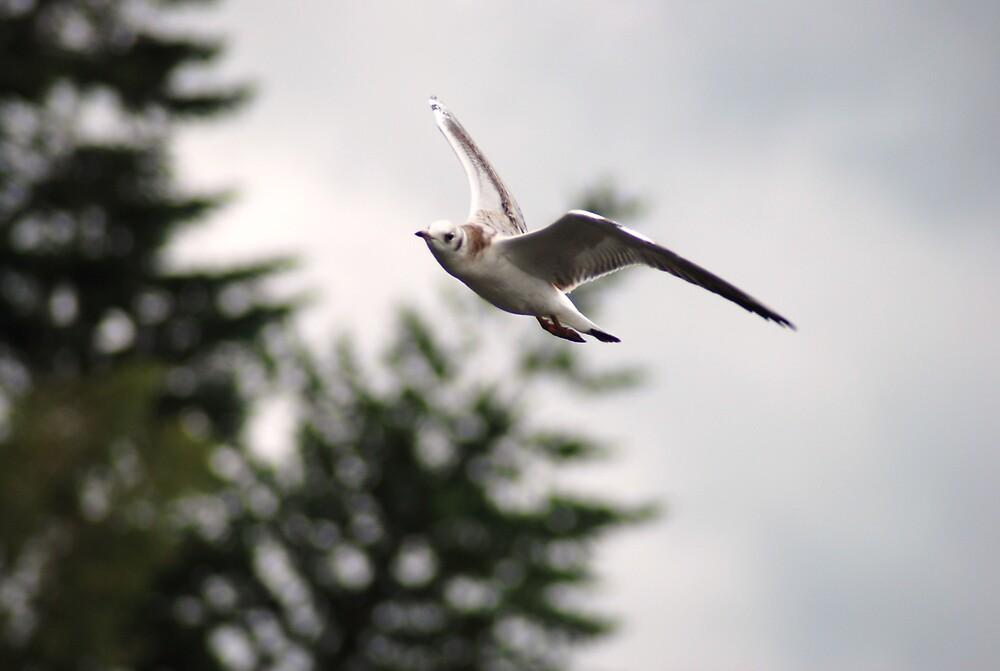 in full flight  by Hasriel