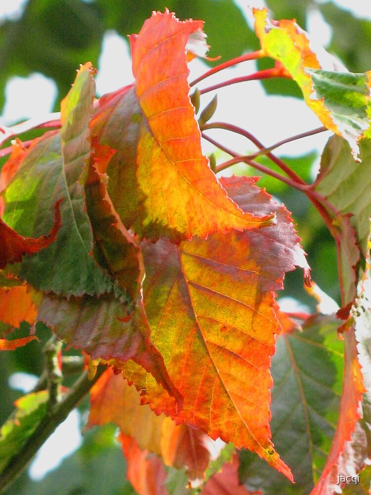 Autumn Already by jacqi