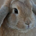 Portrait of Bungee by James Troi