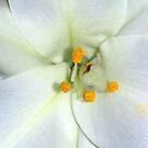 Sprinkle of Yellow by Virginia N. Fred