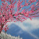 Cherry Blossom by Adam Santana