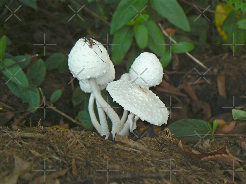 Mushroom Cluster I by Sheila Simpson