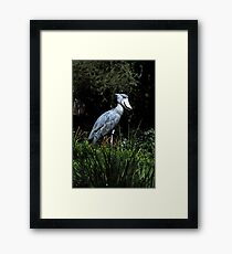 Shoe Billed Stork Framed Print
