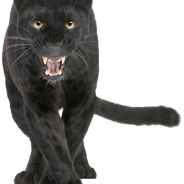 black leopard by mspaulista