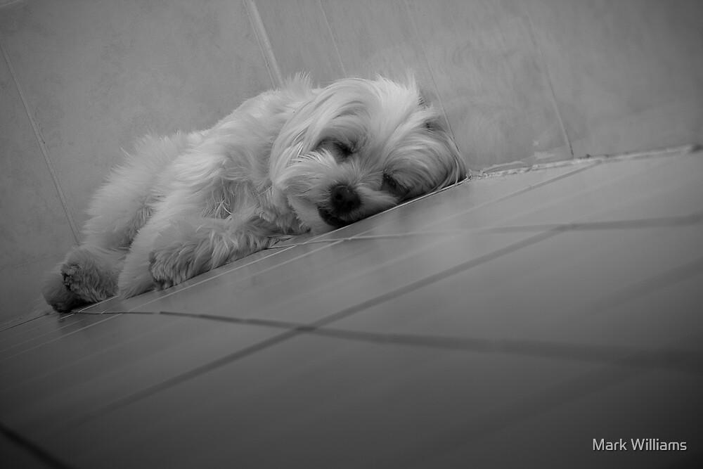 Lazy Boy Hank by Mark Williams
