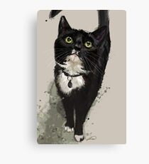 Project Caturday - Junior of The Black Cat Club Canvas Print