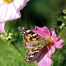 Butterfly in Flower Garden by Lori Peters