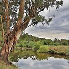 River Gums by WendyJC