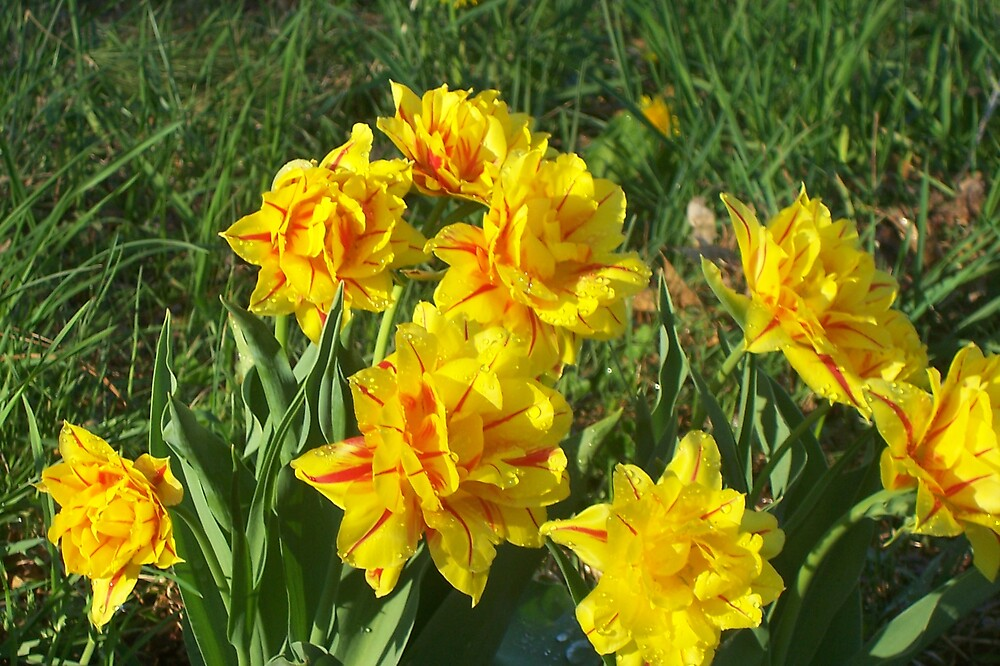 My side yard in spring by lsmond