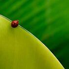 Red dot by Rhian
