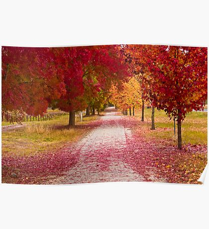 Bright Red Path  Poster