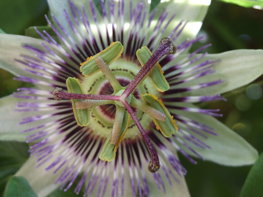 flower power by darkmonkuk