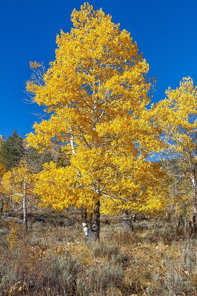Tree in Autumn - High Sierra by Richard Thelen