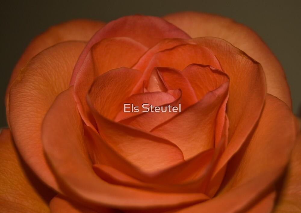 Orange by Els Steutel