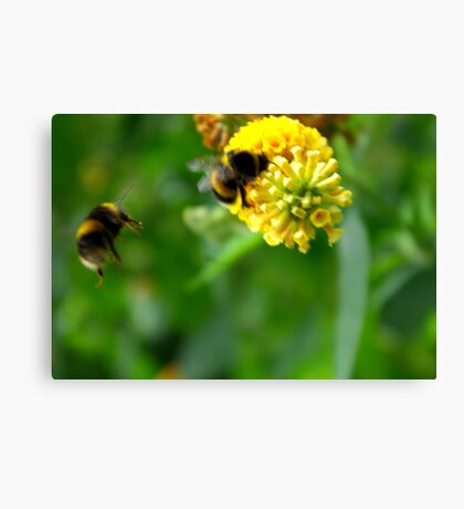Bee #4 Canvas Print