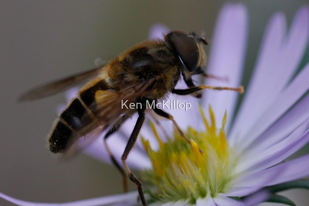 busy bee.............. by Ken McKillop