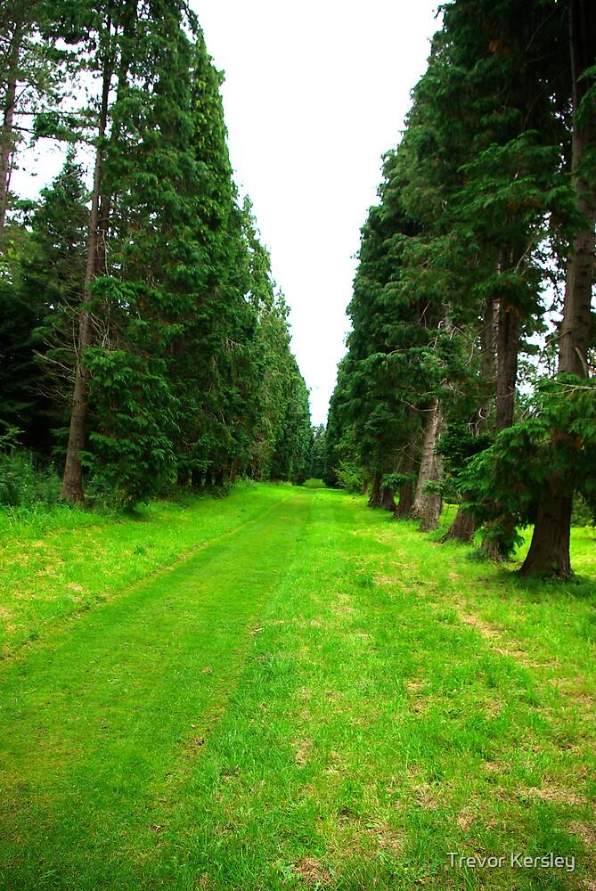 Pine Tree Avenue by Trevor Kersley